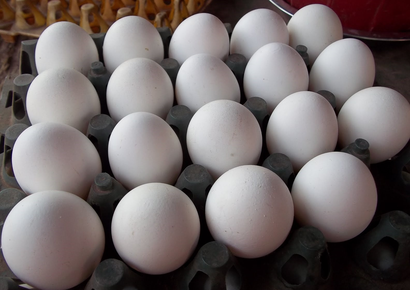 Eggs Production - Khas Farms